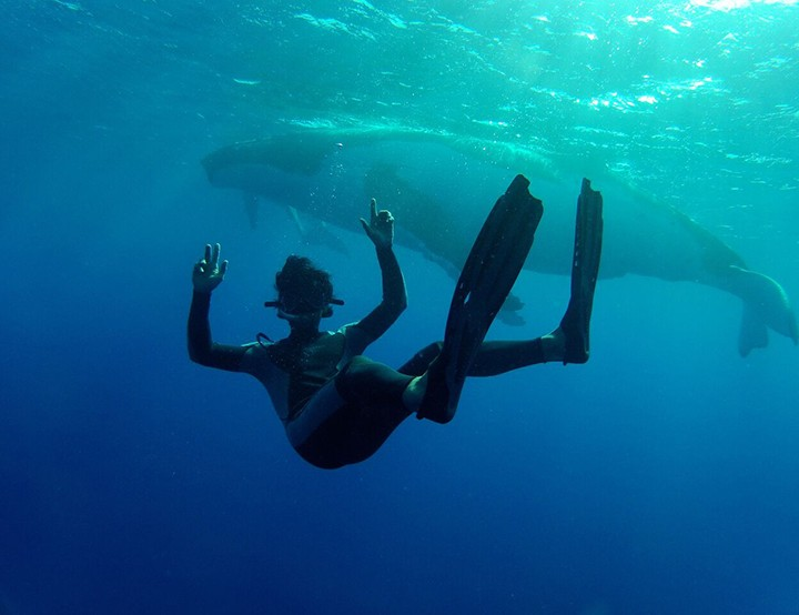 Whale watching in The Islands Of Tahiti